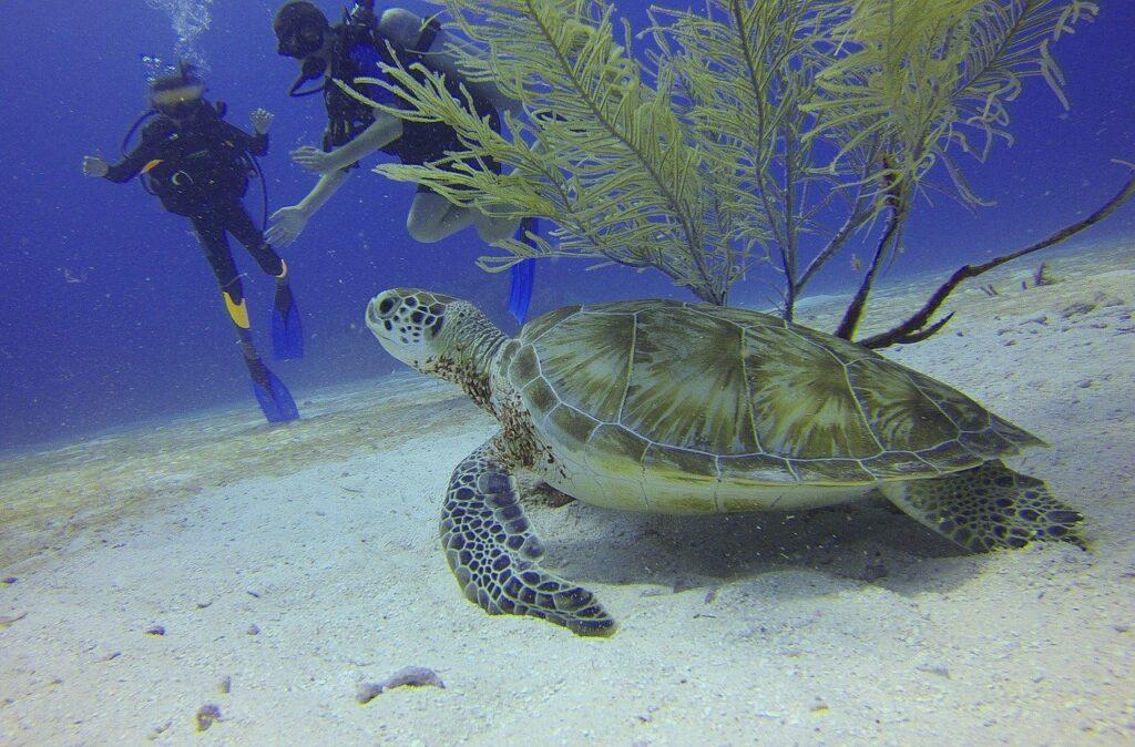 Schildkröte Rundreise Mexiko